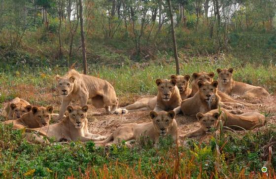 《疯狂动物城》火了,里面的各种动物萌翻了观众。其实,在这座城市里,就有这么一个真实版的动物城,那就是上海野生动物园。那里的动物更加真实可爱,影片中很多动物的原型,都在这座上野动物城里快乐悠闲地生活着。 非洲狮市长先生的幸福生活   耳廓狐主角的搭档们   猎豹速度超快的逃犯克星   牦牛神秘的杀马特精神导师  熊猫人气爆棚的主播   羚羊德艺双馨的大明星   老虎大明星的伴舞者们(大明星泪奔)   如果你想感受真实的动物城,那就来上海野生动物园吧!在这里可以一睹《