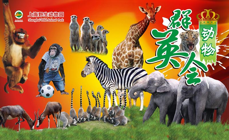 上海野生动物园的动物们动物群英会开始啦,一时间群英荟萃,众星云集。英雄之争:森林之王老虎和草原之王狮子争霸武林,谁是百兽之王?英模之秀:小清新羊驼、高富帅长颈鹿、礼仪小姐火烈鸟,谁会成为大家心中的超级名模?英才遴选:最强大脑黑猩猩、森林消防员大象、灌篮高手海狮,哪位的才艺让您拍案叫绝?    上海野生动物园的动物们动物群英会开始啦,一时间群英荟萃,众星云集。野生动物园内热闹非凡。现在就让我们来扒一扒此次的动物群英会有哪些看点。 看点一:(英雄:谁是百兽之王?) (森林之王VS草原之王) 老虎生活在森林里,