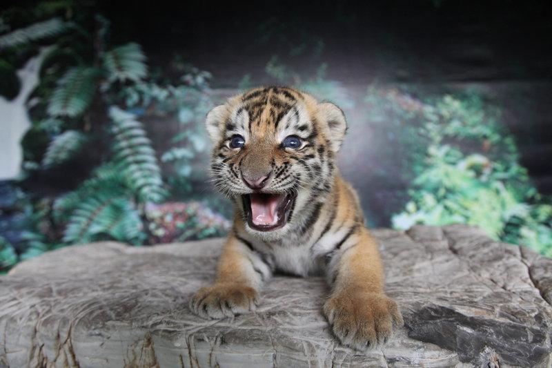 首页 动物科普 / 探秘动物          跖行动物也叫掌行动物,它们在