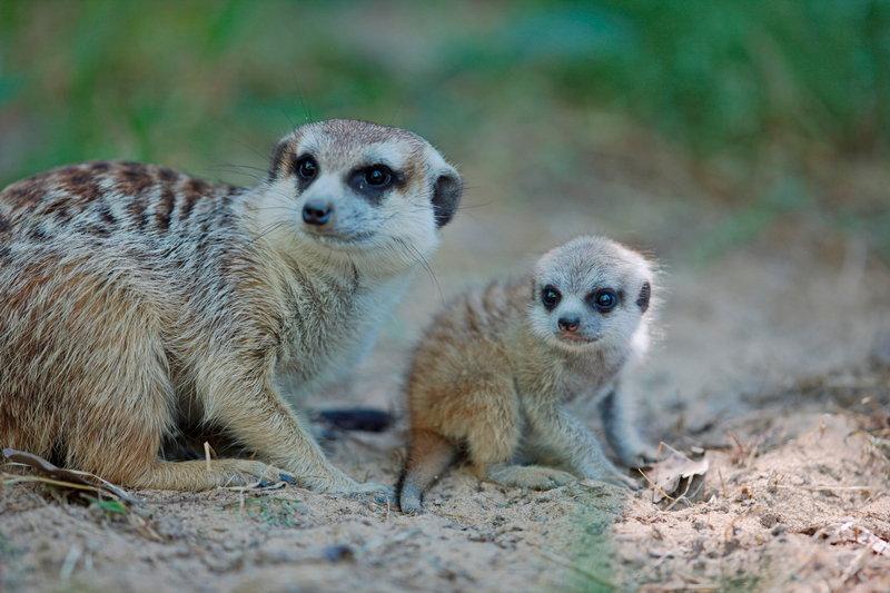 上海野生动物园开启小动物欢乐节