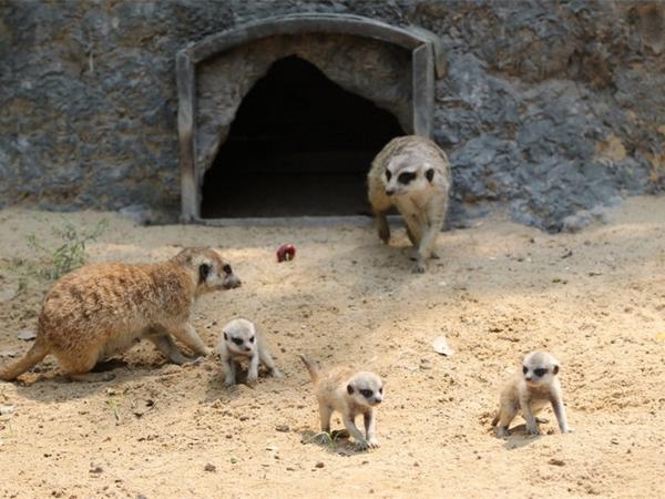 小动物乐园