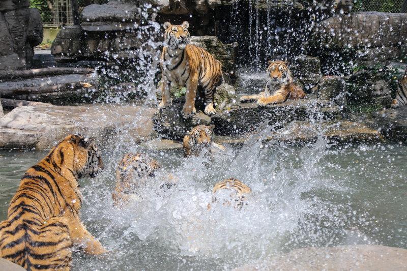 这个夏天,到上海野生动物园,跟着动物一起浪吧!