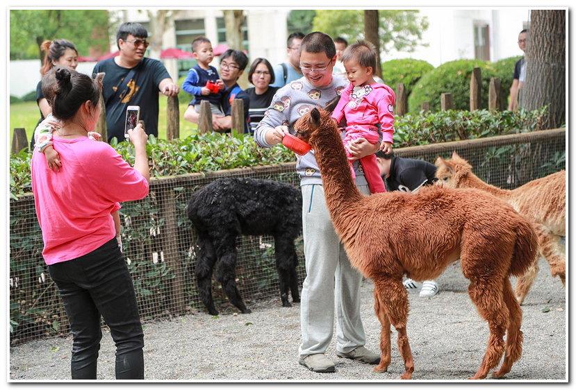 这里能与各种可爱的动物互动逗乐