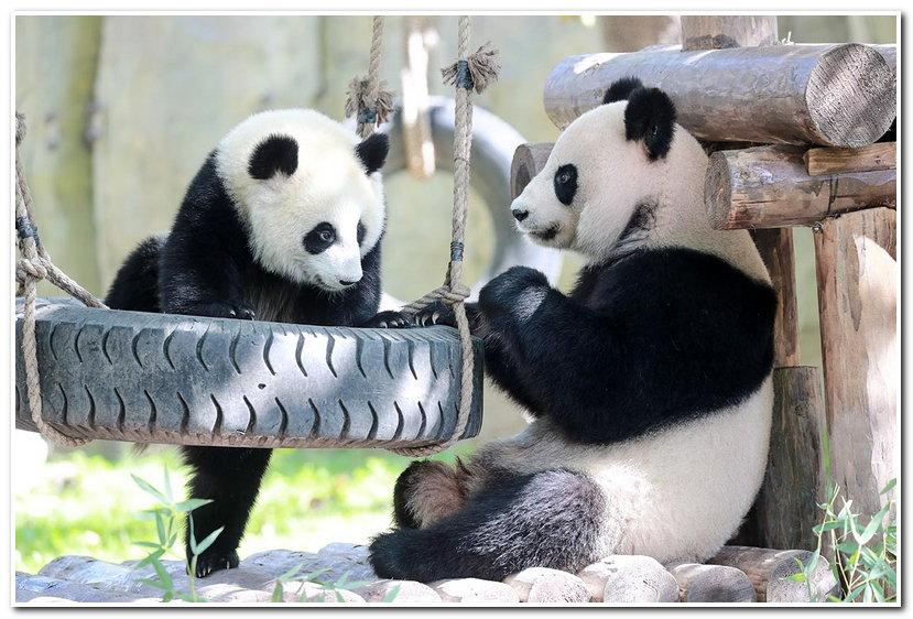 """12:24           最近,上海野生动物园里掀起了一股""""晒娃""""的热潮,大"""