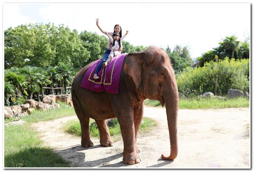 活动参与方式:在上海野生动物园游玩时拍下与特定明星动物的互动照片