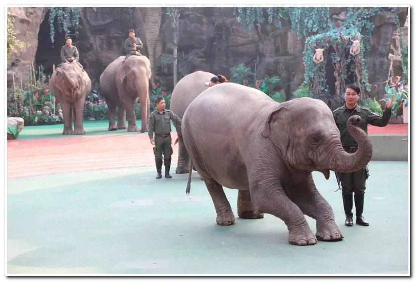 4,大象——《瑜伽秀》:《疯狂动物城》里角色的复制粘贴版,大象展现