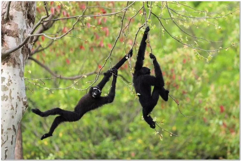 熊猫宝宝 爱玩派 爱玩派,不仅看动物,还要拍各种和动物合影的照片,燃