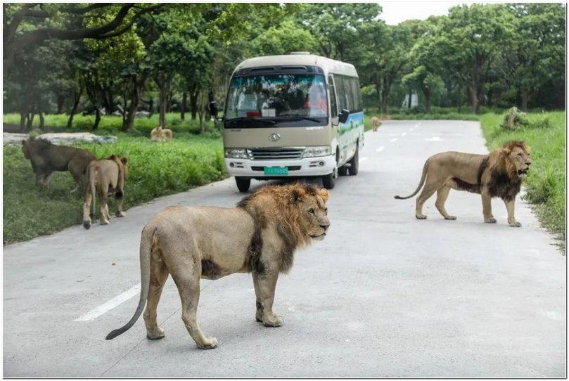 野生动物园车车大集合