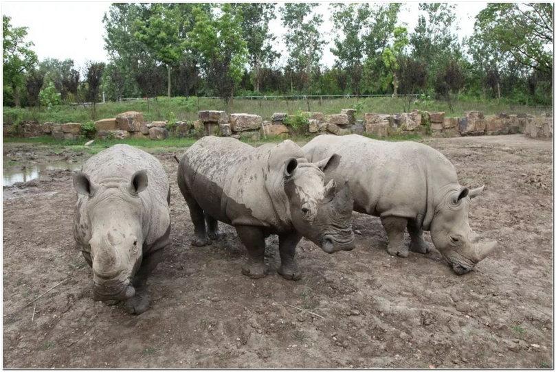 作者:上海野生动物园